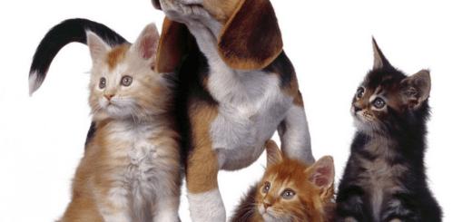 продлить жизнь домашним животным