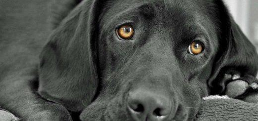 аллергия у собак