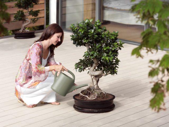 комнатные растения уход в домашних