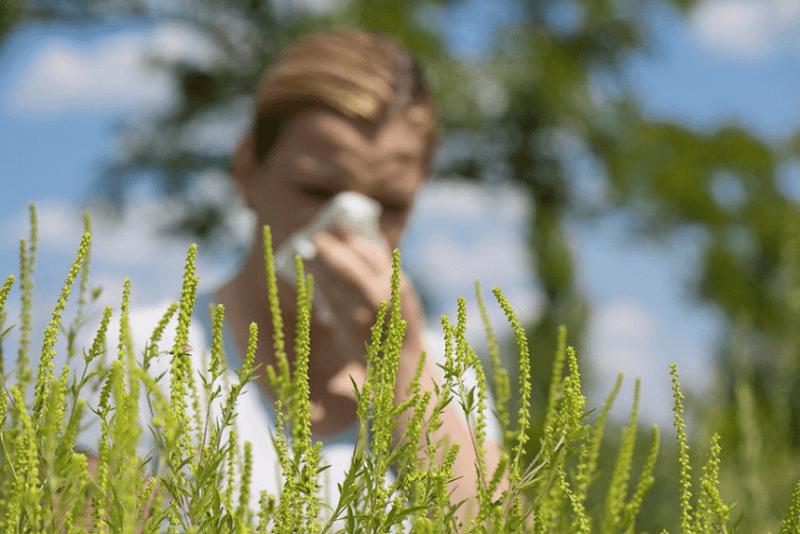 сезонная аллергия весной