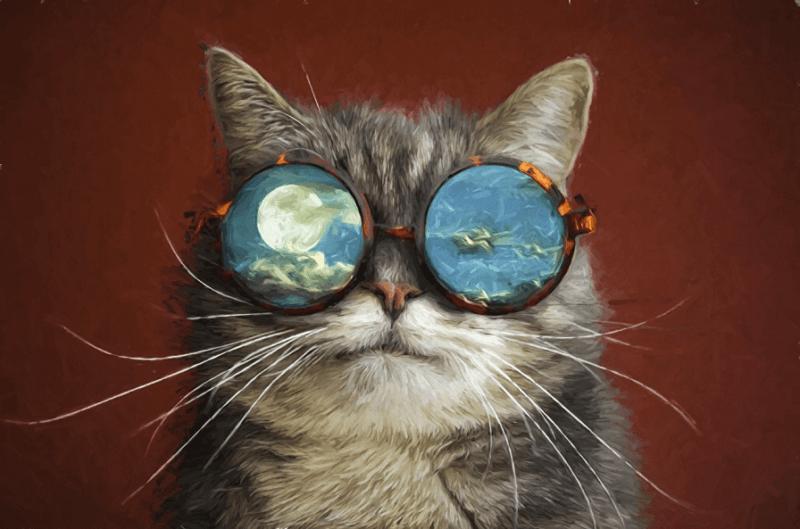 уроки жизни от кошки