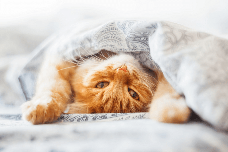 уроки жизни от кота