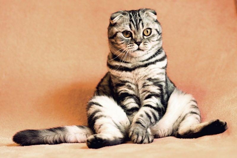 почему поклонялись кошкам
