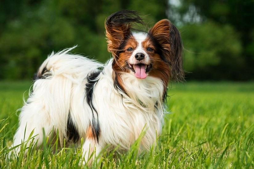 средние собаки для квартиры