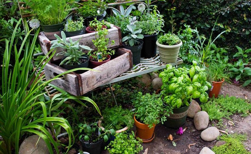 посадить пряные травы