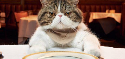 чем кормить домашнего кота