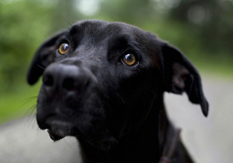 депрессия у собак симптомы и лечение