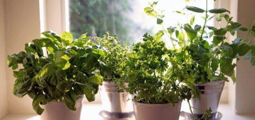 самые ароматные комнатные растения