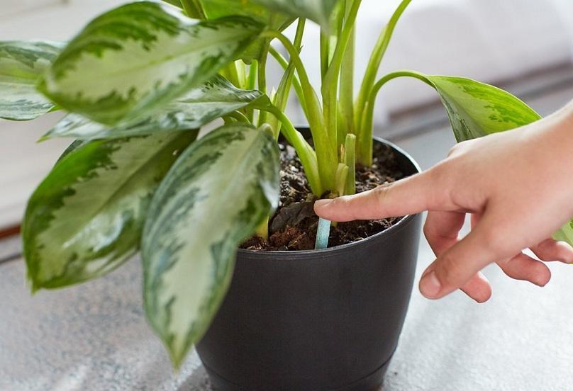 комнатные растения зимой уход в домашних условиях