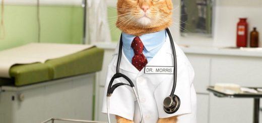 кошка лечит болезни