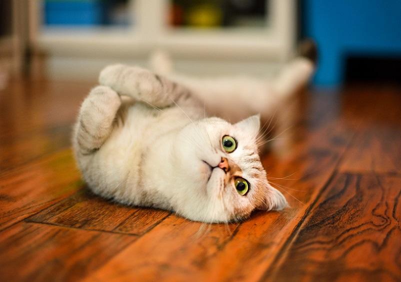 как понравиться кошке