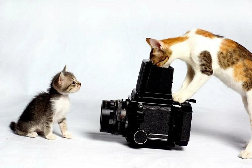 как снимать кота на камеру
